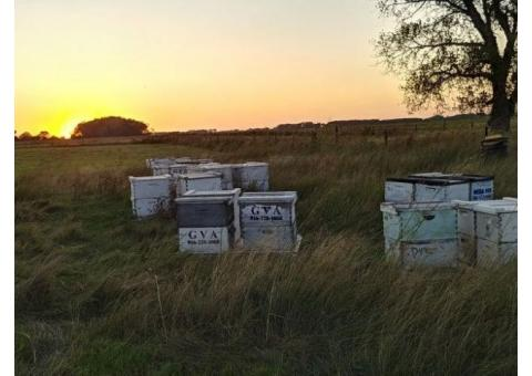 Land to place honeybees in Wichita county Texas or surrounding area